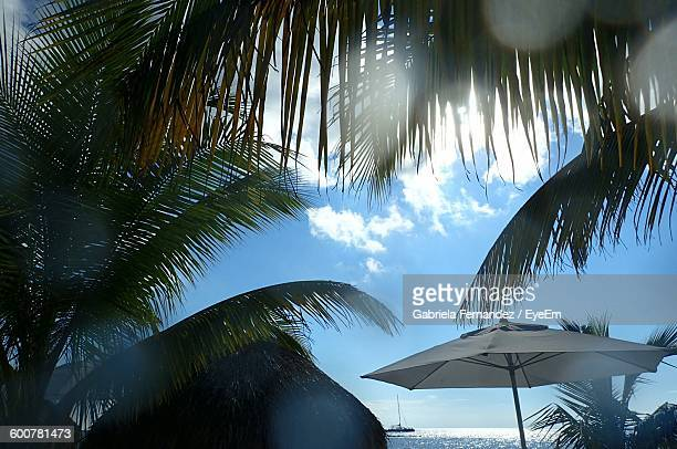 Low Angle View Of Palm Trees And Parasol On Beach