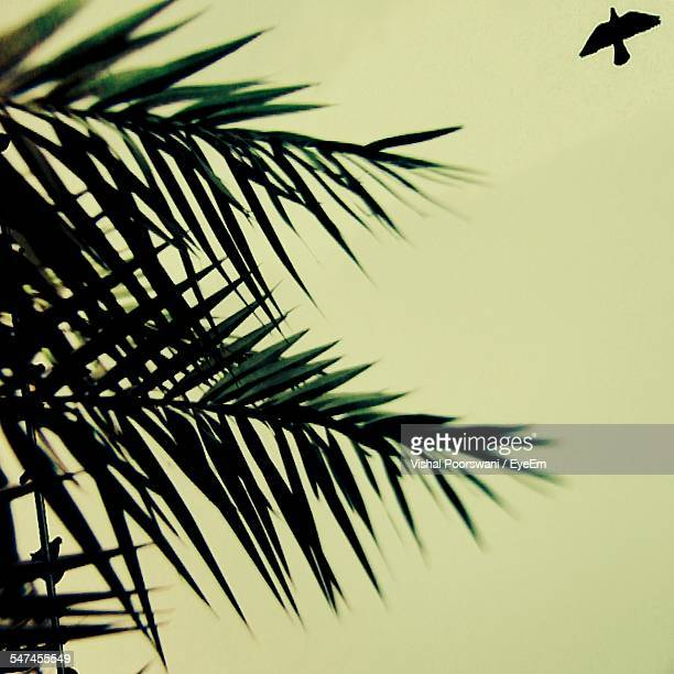 Low Angle View Of Palm Trees And Silhouette Bird Against Clear Sky