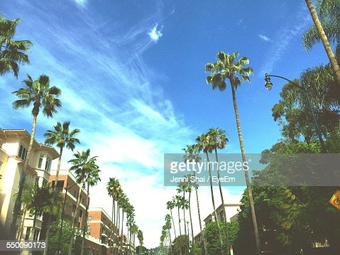 Low Angle View Of Palm Trees By Building Against Blue Sky