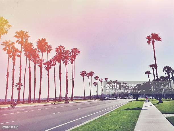 Low Angle View Of Palm Trees Growing By Street Against Clear Sky