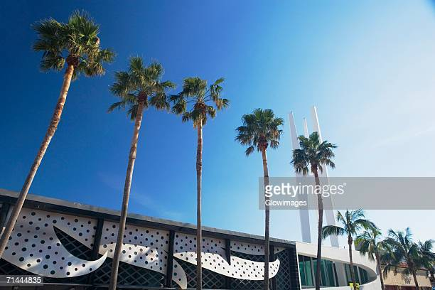 Low angle view of palm trees in front of a building, Miami, Florida, USA