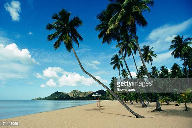 Low angle view of palm trees on a beach, Puerto Rico