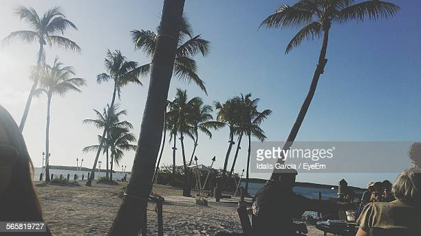 Low Angle View Of Palm Trees On Beach