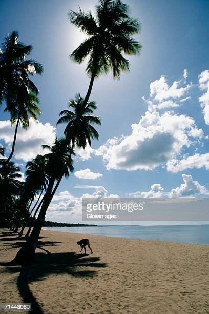 Low angle view of palm trees on Mayaguez beach, Puerto Rico