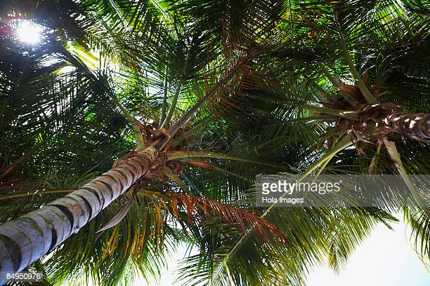 Low angle view of Palm trees, Pinones, Puerto Rico
