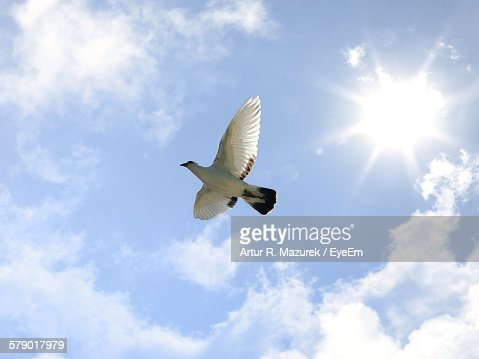 Low Angle View Of Pigeon Flying Against Sky