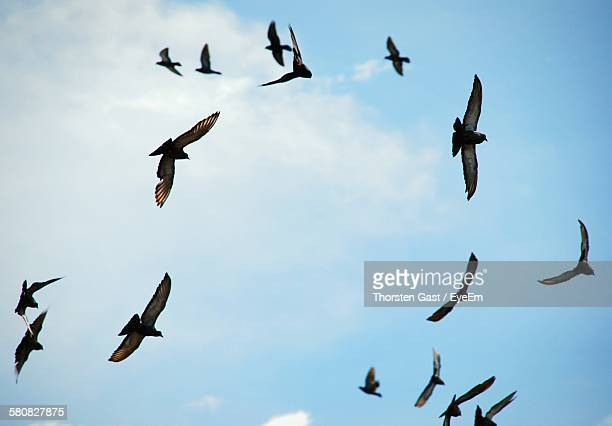 Low Angle View Of Pigeons Flying Against Sky
