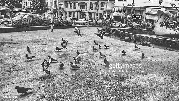 Low Angle View Of Pigeons On Footpath