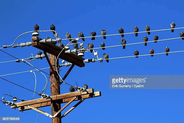 Low Angle View Of Pigeons Perching On Telephone Pole Against Clear Blue Sky