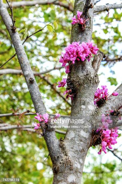 Low Angle View Of Pink Flower Tree