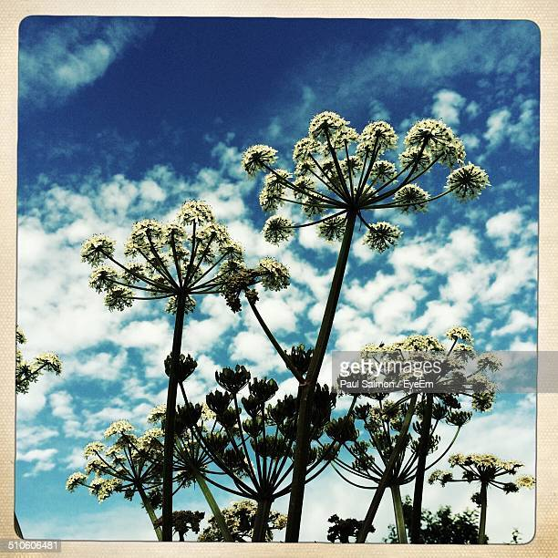Low angle view of plants against blue sky and clouds