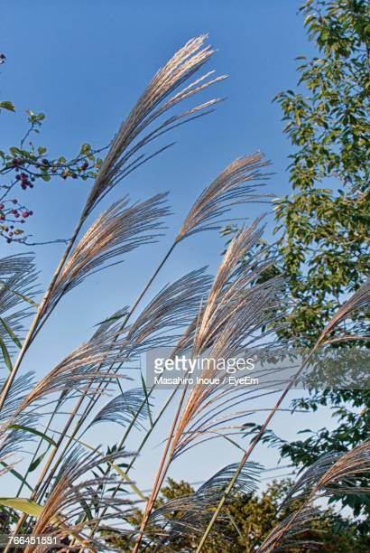 Low Angle View Of Plants Against Blue Sky