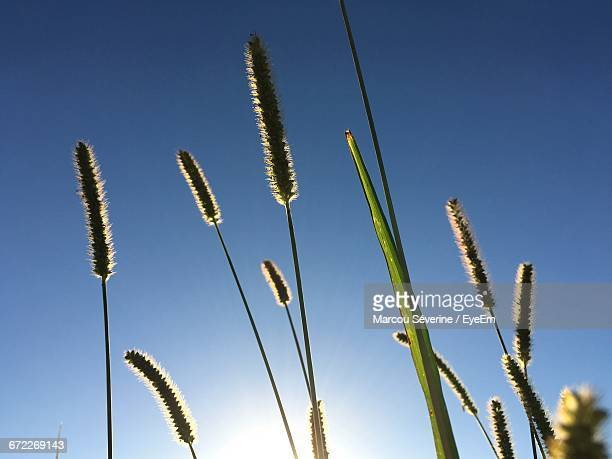 Low Angle View Of Plants Growing Against Blue Sky