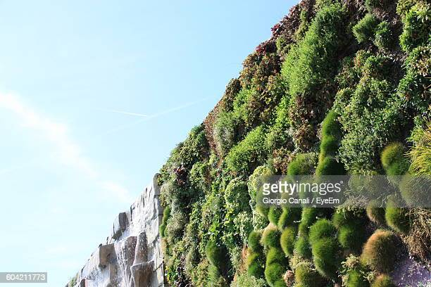 Low Angle View Of Plants Growing At Vertical Garden