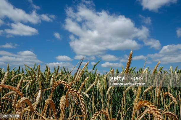 Low Angle View Of Plants Growing On Field Against Sky