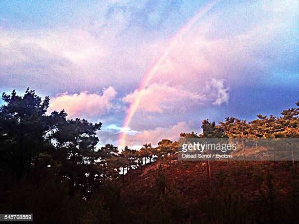 Low Angle View Of Rainbow Above Trees On Field