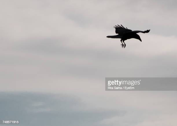 Low Angle View Of Raven Flying Against Cloudy Sky