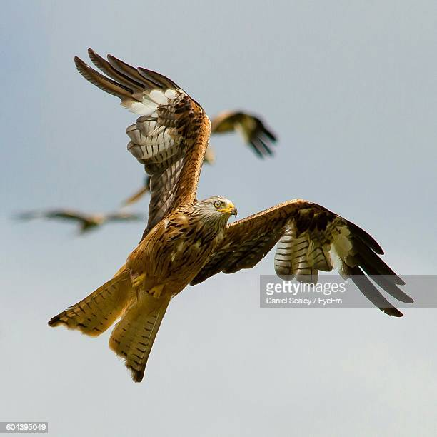 Low Angle View Of Red Kite Flying Against Sky