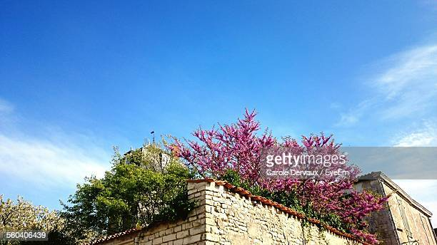 Low Angle View Of Roof Garden On House Against Blue Sky