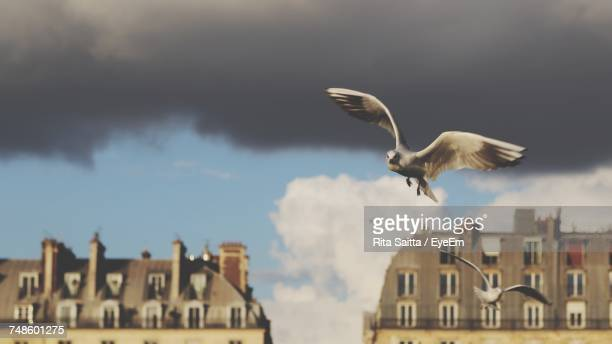 Low Angle View Of Seagull Flying Against Cloudy Sky In City
