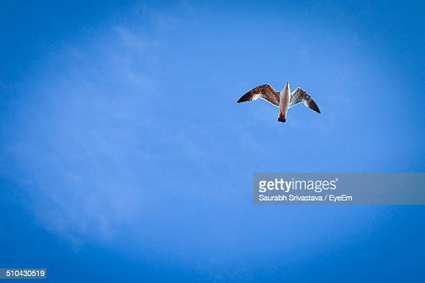 Low angle view of seagull in flight against clear blue sky