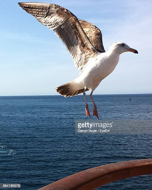 Low Angle View Of Seagull Landing On Railing By Sea Against Sky
