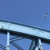 Low Angle View Of Seagull Over Bridge Against Blue Sky On Sunny Day