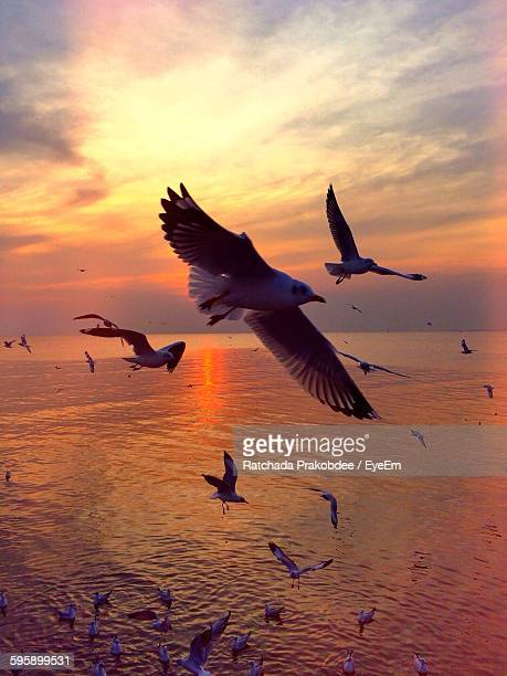 Low Angle View Of Seagulls Flying Over Sea During Sunset