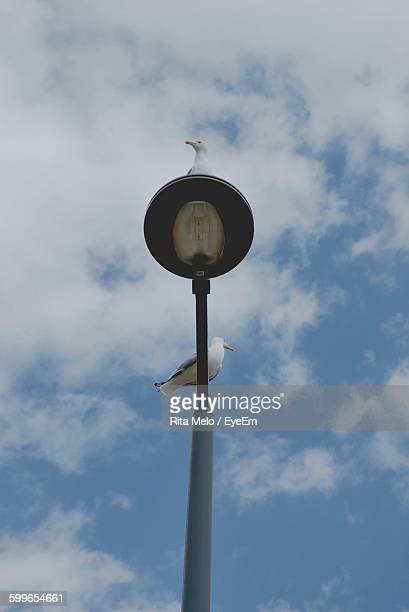Low Angle View Of Seagulls On Street Light