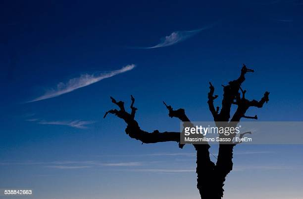Low Angle View Of Silhouette Bare Tree Against Blue Sky