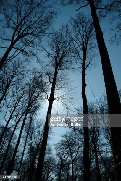 Low Angle View Of Silhouette Bare Trees Against Sky