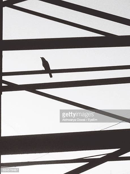 Low Angle View Of Silhouette Bird On Metal Bar