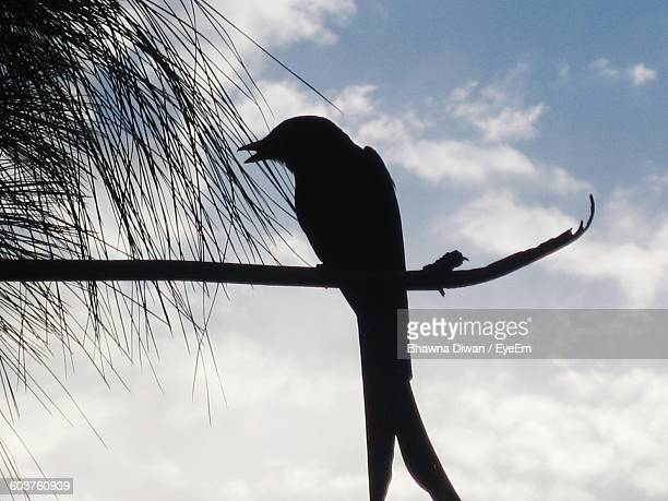 Low Angle View Of Silhouette Bird Perching On Branch Against Sky