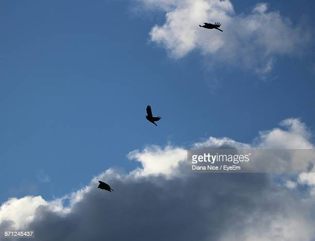 Low Angle View Of Silhouette Birds Flying Against Blue Sky