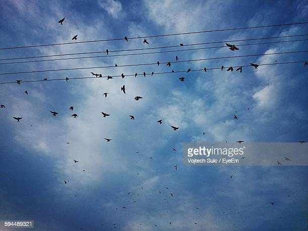 Low Angle View Of Silhouette Birds Flying Against Cloudy Sky