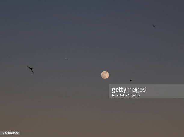 Low Angle View Of Silhouette Birds Flying Against Sky At Night