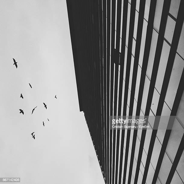 Low Angle View Of Silhouette Birds Flying By Building Against Sky