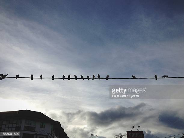 Low Angle View Of Silhouette Birds On Power Cable Against Cloudy Sky
