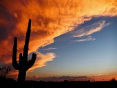 Low Angle View Of Silhouette Cactus Against Cloudy Sky During Sunset
