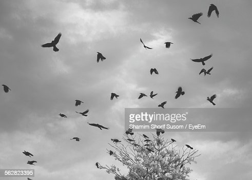Low Angle View Of Silhouette Crows Against Storm Cloud