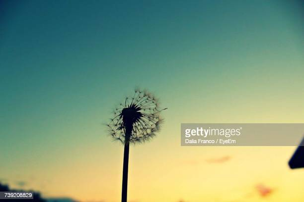 Low Angle View Of Silhouette Dandelion Against Sky