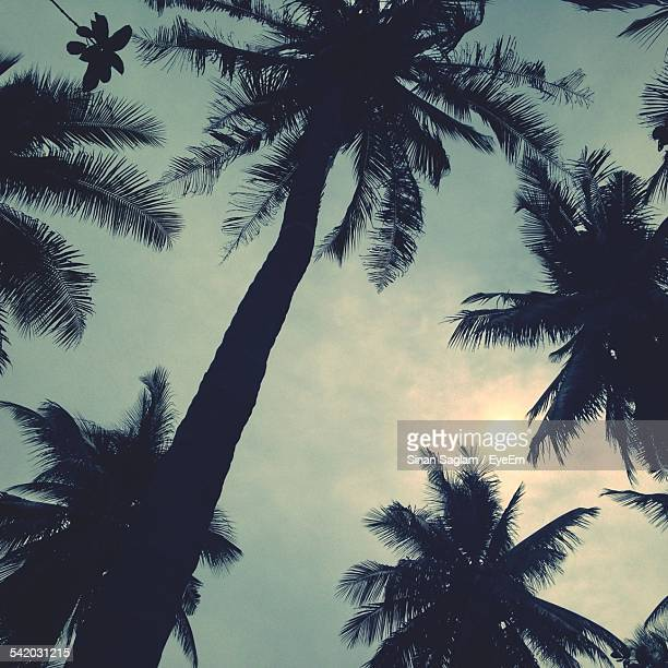 Low Angle View Of Silhouette Palm Trees Against Cloudy Sky