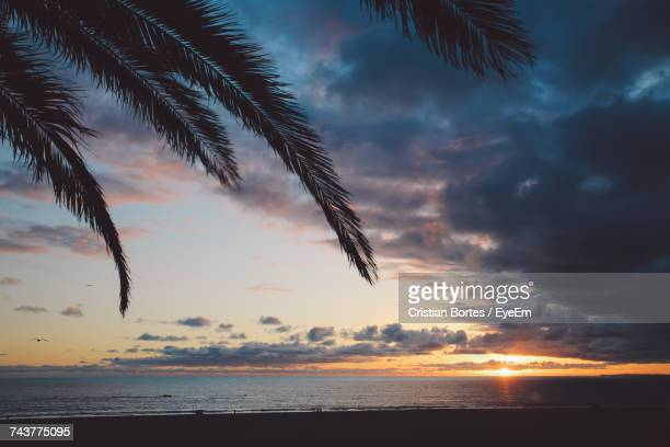Low Angle View Of Silhouette Palm Trees On Beach Against Sky