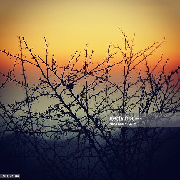 Low Angle View Of Silhouette Thorny Plant Against Sky During Sunset