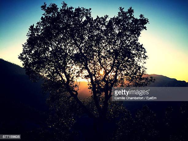 Low Angle View Of Silhouette Tree Against Mountain During Sunset