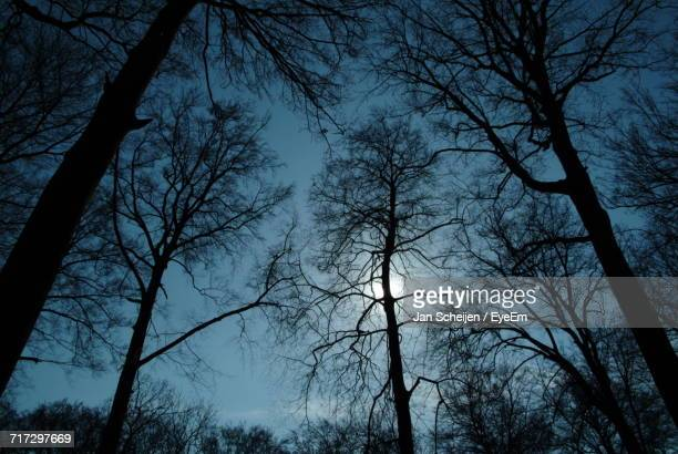 Low Angle View Of Silhouette Trees Against Sky At Dusk