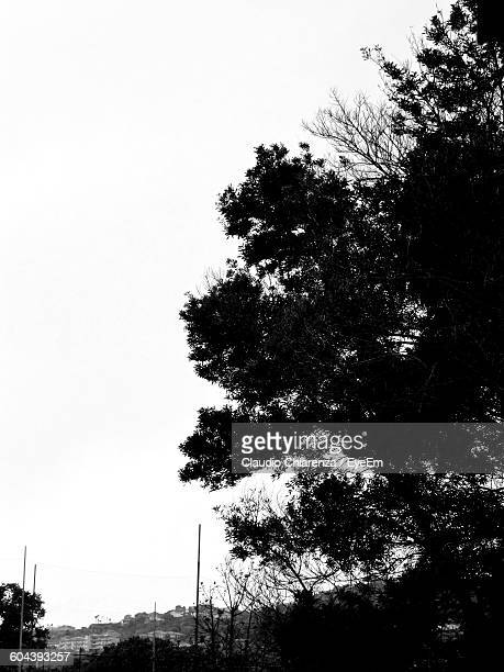 Low Angle View Of Silhouette Trees On Field Against Clear Sky