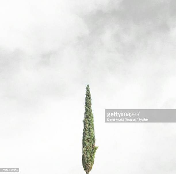Low Angle View Of Single Green Tree In Foggy Weather