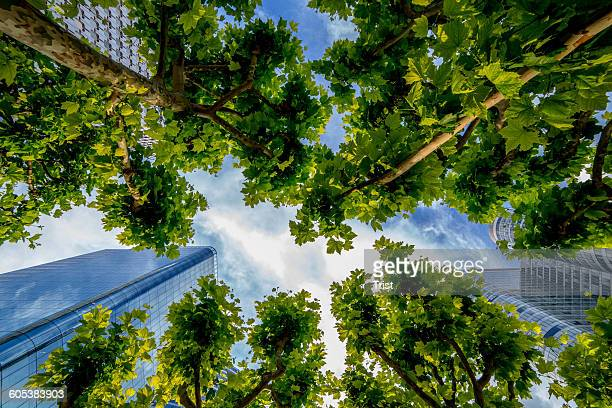 Low angle view of skyscrapers and trees, Paris, France
