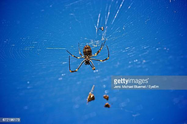 Low Angle View Of Spider On Web Against Blue Sky